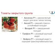 КАТАЛОГ: Семена НУНЕМС Байер  ТОМАТЫ.  BAYER Nuhnems (ссылка ЯндексДиск)